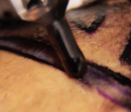Por que muitas vezes a tinta de tatuagem não desce na biqueira?